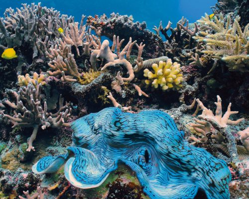 australian-great-barrier-reef-21
