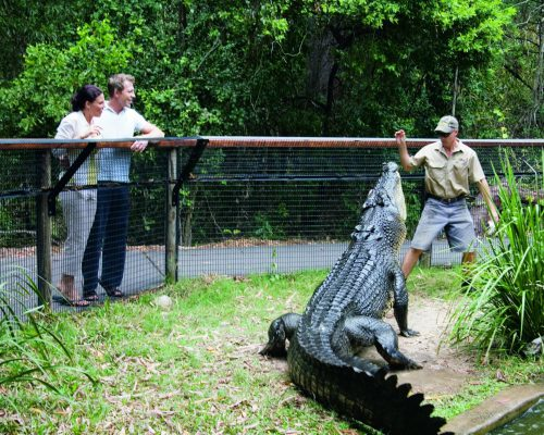 croc-feeding-cairns-port-douglas-1