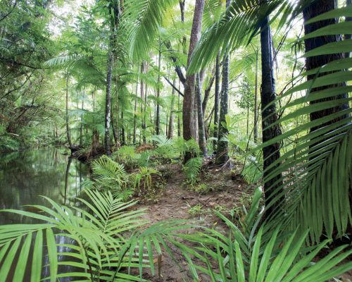 daintree-national-park-queensland-17