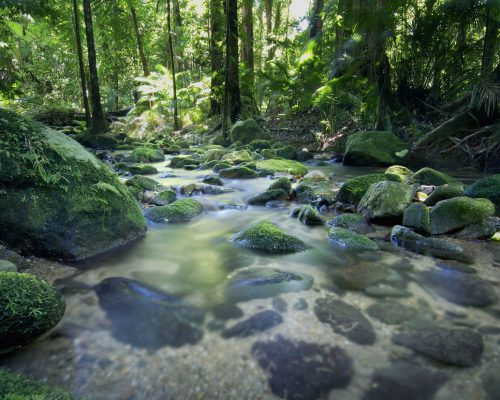 daintree-rainforest-cairns-port-douglas-1